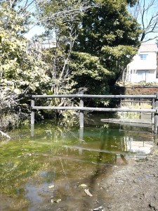 二子浦の池の全景