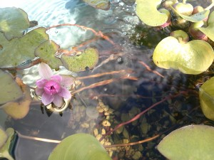 池。意外に花は造花