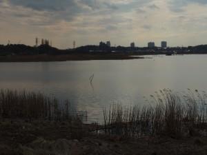 まだ冬っぽい印旛沼
