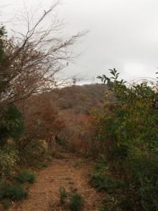 ゆるゆる女体山への散策路