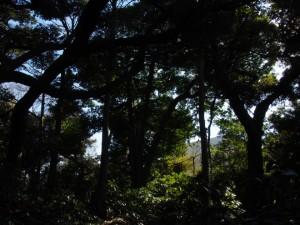 木の陰と光