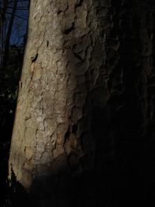 良い陰影の木肌
