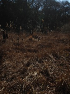 枯葉の廣野