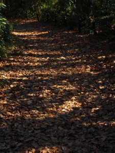 落ち葉の散策路