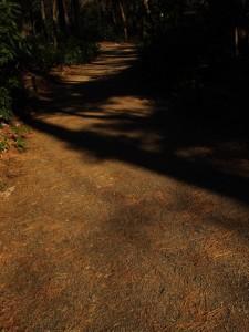 松葉の落ちる散策路