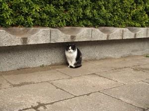 すこし・・・近づいて・・・猫