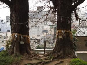 水神社の夫婦銀杏
