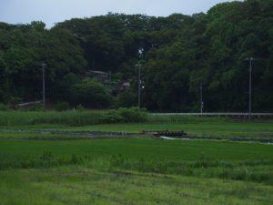 田んぼの中の橋