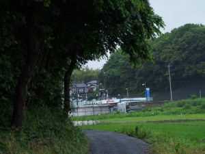 夏見緑地の側道