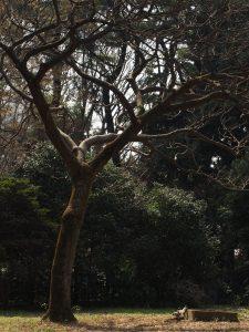 いい木のかんじぃ