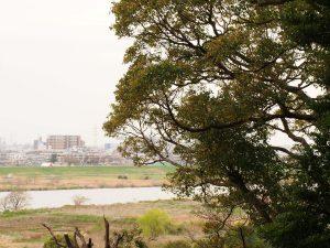 江戸川を見下ろして・・・