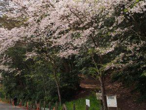 夏見緑地 2017.4.10
