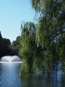 噴水 井の頭公園