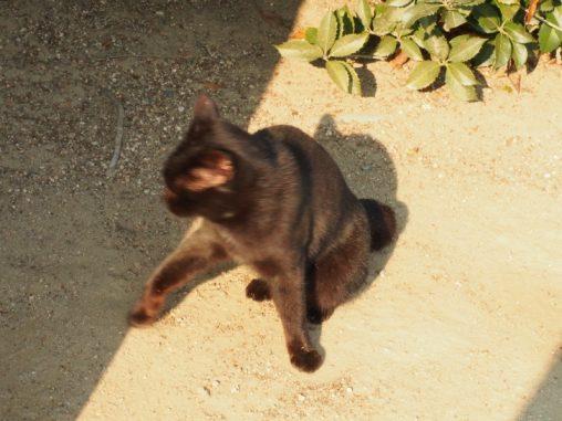 後楽園 猫