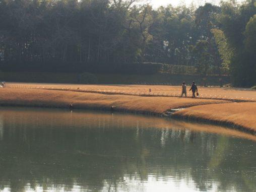 後楽園 池