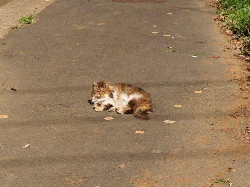 モップ猫 気持ちよさそう