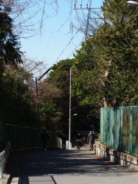 船橋中学校裏の坂道