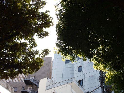 こじんまりとした木々