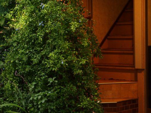 入り口の木との関係性