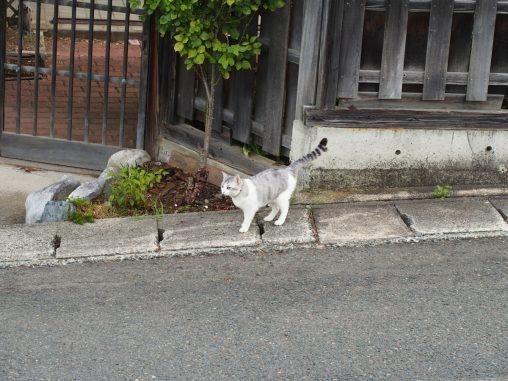 どこかの家の飼い猫