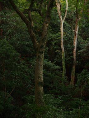 木の存在感