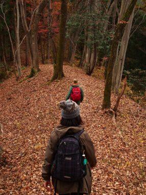 落ち葉の森
