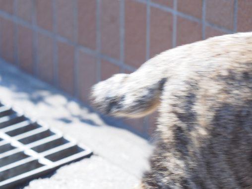リズム近くにいた猫