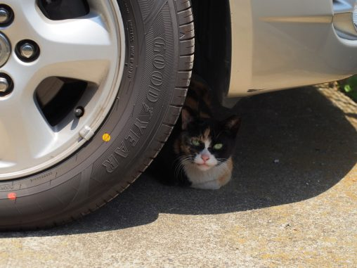 タイヤの陰からしきりに話しかけてくる