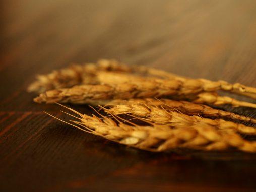 カウンターの麦