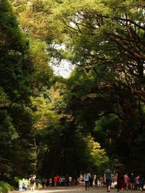 参道の緑がキレ―
