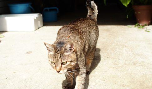 サービス猫