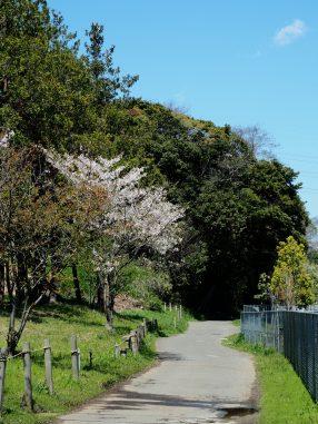 運動公園への道