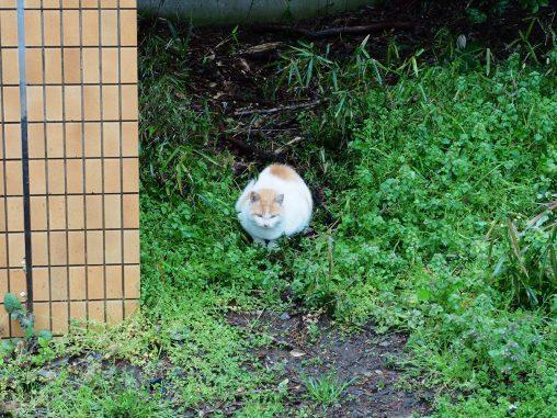 遠目に見てるネコ