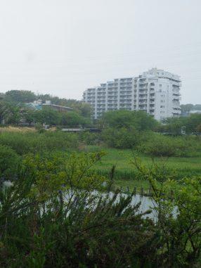 長津川親水公園2020.4.27