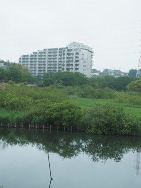 長津川親水公園