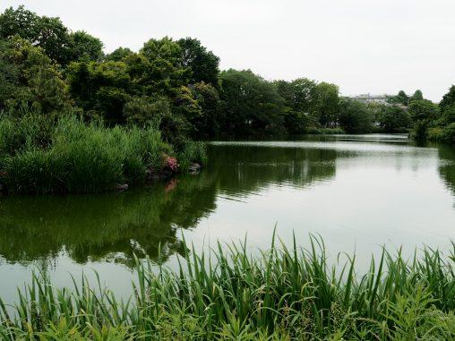 じゅんさい池