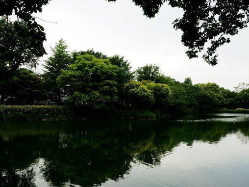 緑色のじゅんさい池