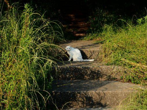 白猫 長津川