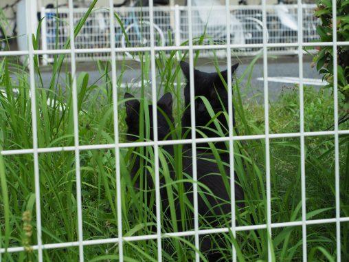 黒猫 二匹