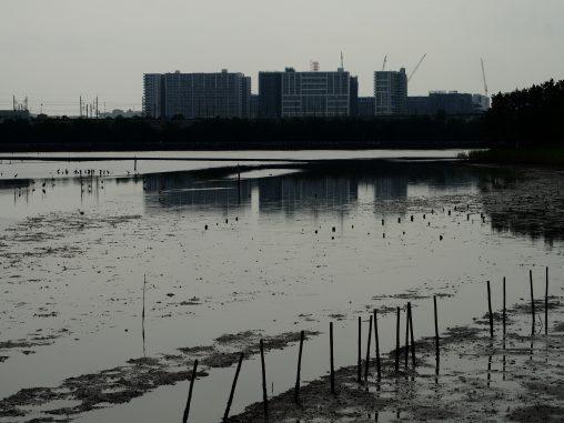谷津干潟2020.7.20