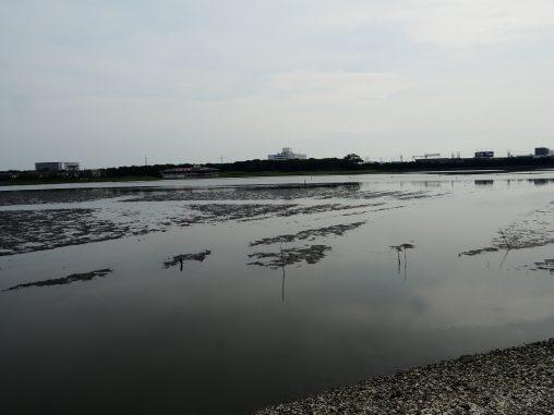 谷津干潟2 2020.7.20