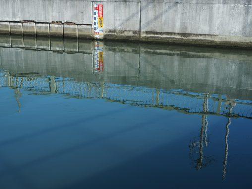海老川の水面