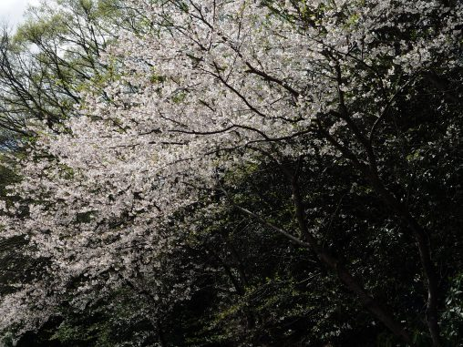 夏見緑地2