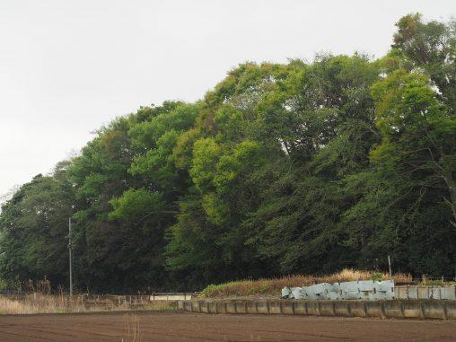 夏見緑地 2021.4.5