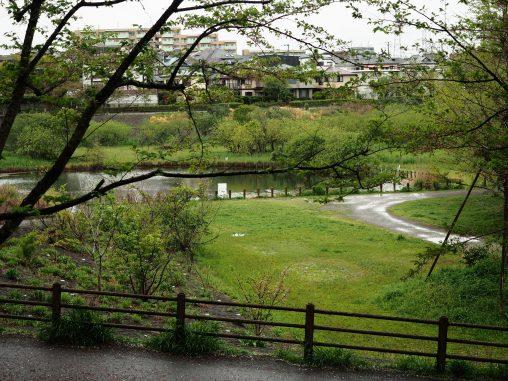 長津川親水公園2021.4.5