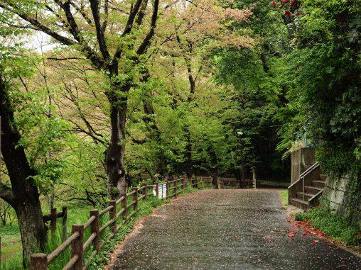 長津川親水公園 遊歩道2021.4.5