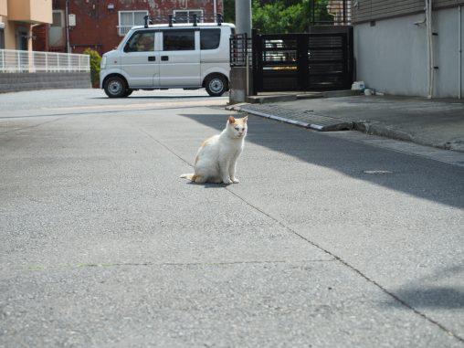 市立体育館の近くネコ
