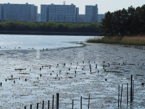 谷津干潟2021.4.19