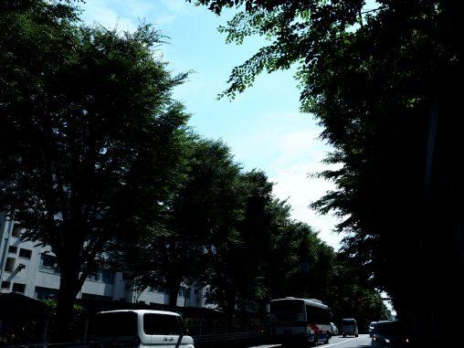 北習志野 街路樹