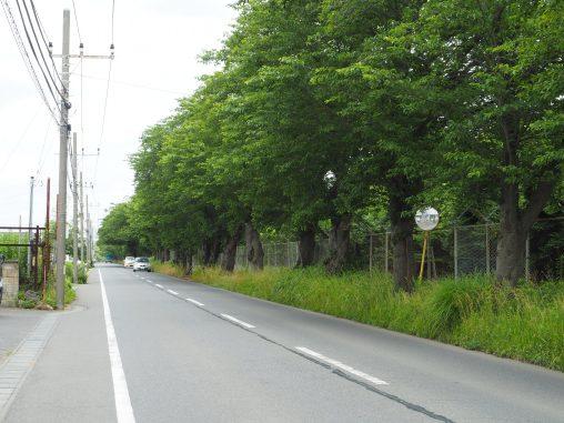 自衛隊基地の道